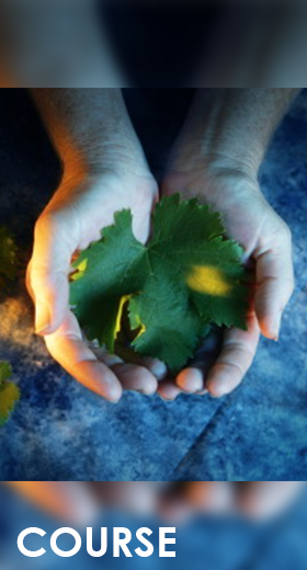 SUSTAINABLE AND RESPONSIBLE: ITALIAN WINES FOR OUR FUTURE